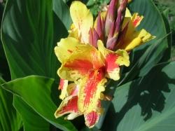 Какие цветы можно посадить в мае.