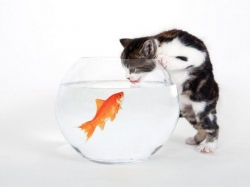 О золотой рыбке