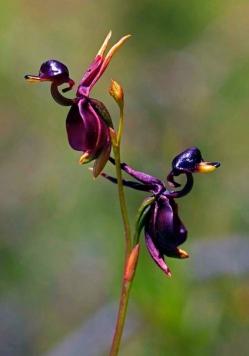 Интересные и необычные растения - тройка лидеров