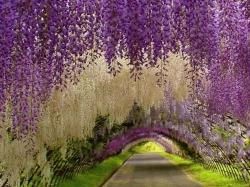 Восхитительный сад цветов Кавати Фудзи в Японии