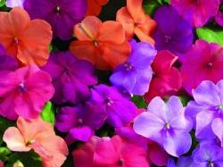 Растения для подвесных горшков