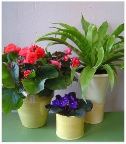 Из-за чего умирают комнатные цветы?