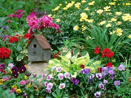 Сад огород своими руками эустома